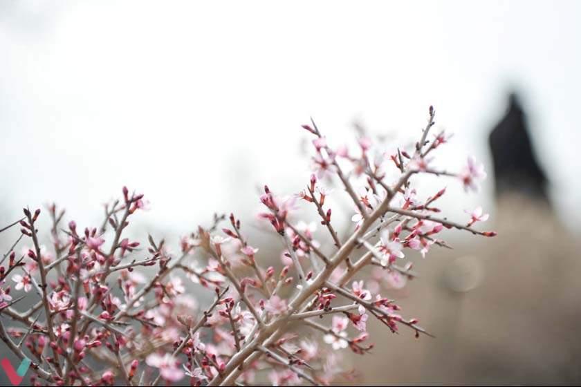 گشتی در باغ ملی گیاه شناسی تهران